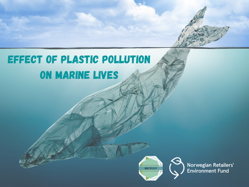Effect of plastic pollution in Marine lives