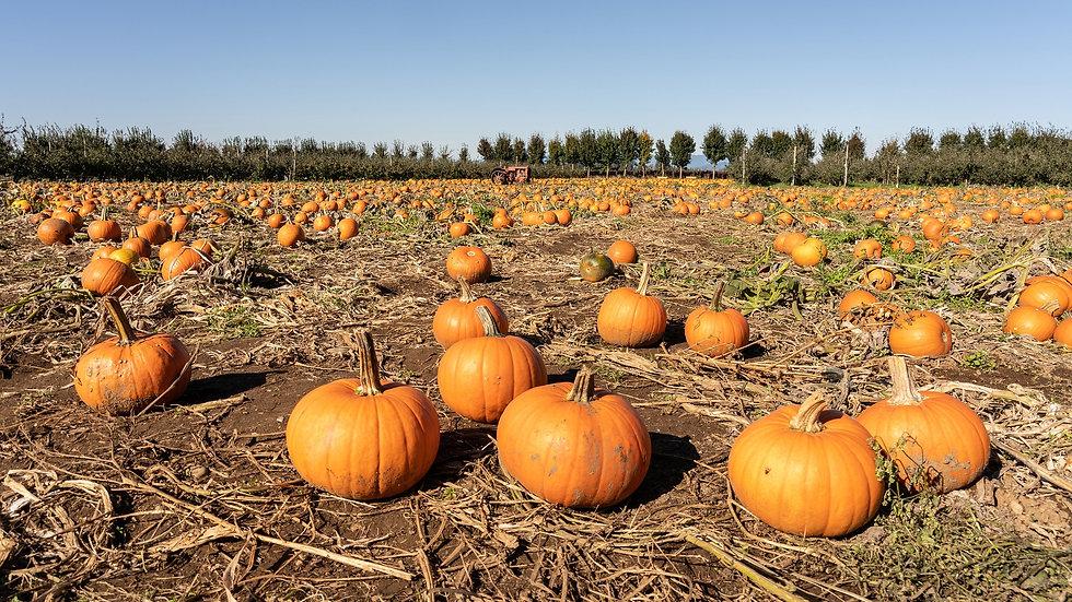 pumpkin-4540291_1920.jpg