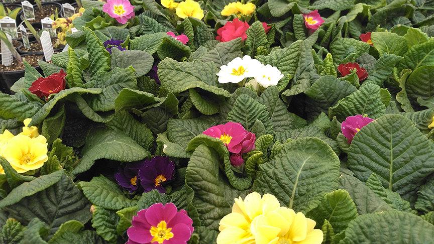 Agles-Farm-Market-flowers.JPG