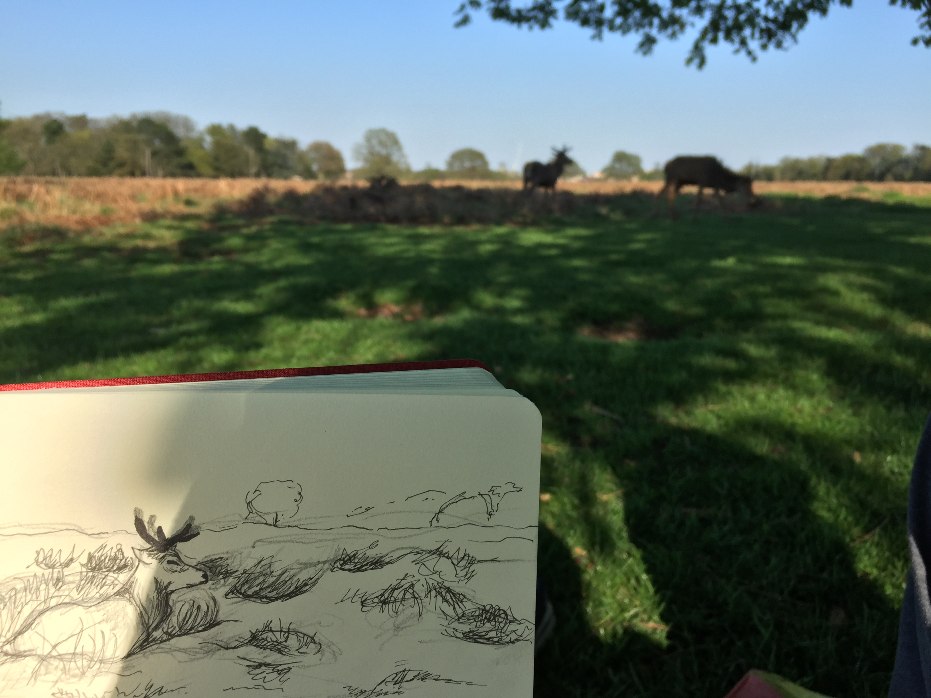 Sketch in Bushy Park