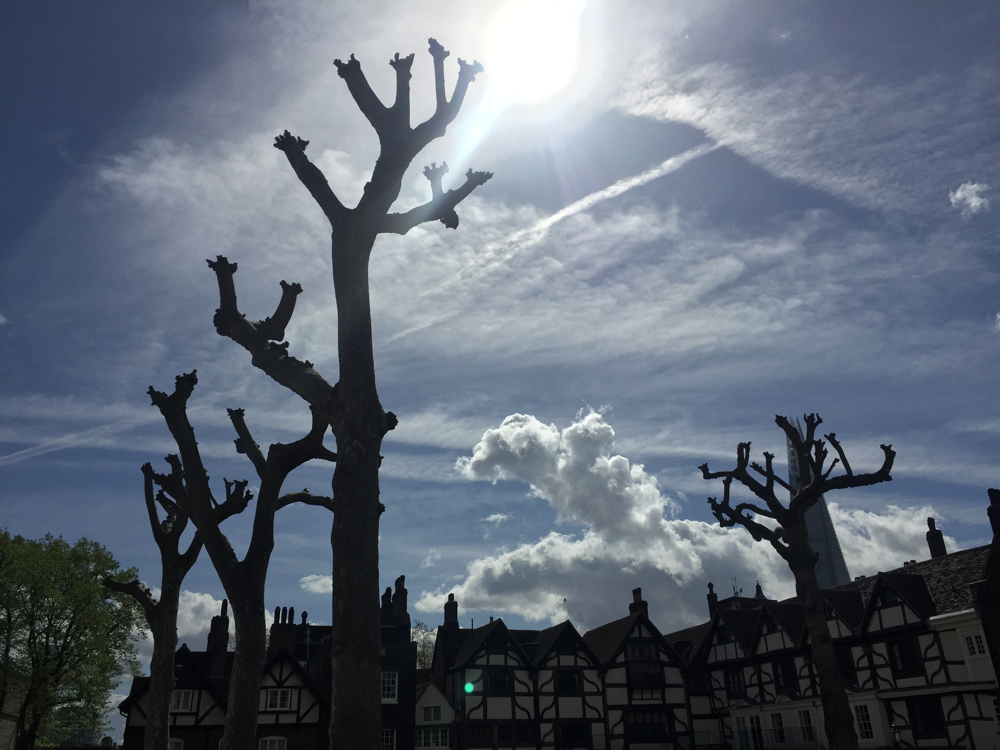 Trees in Tower of London