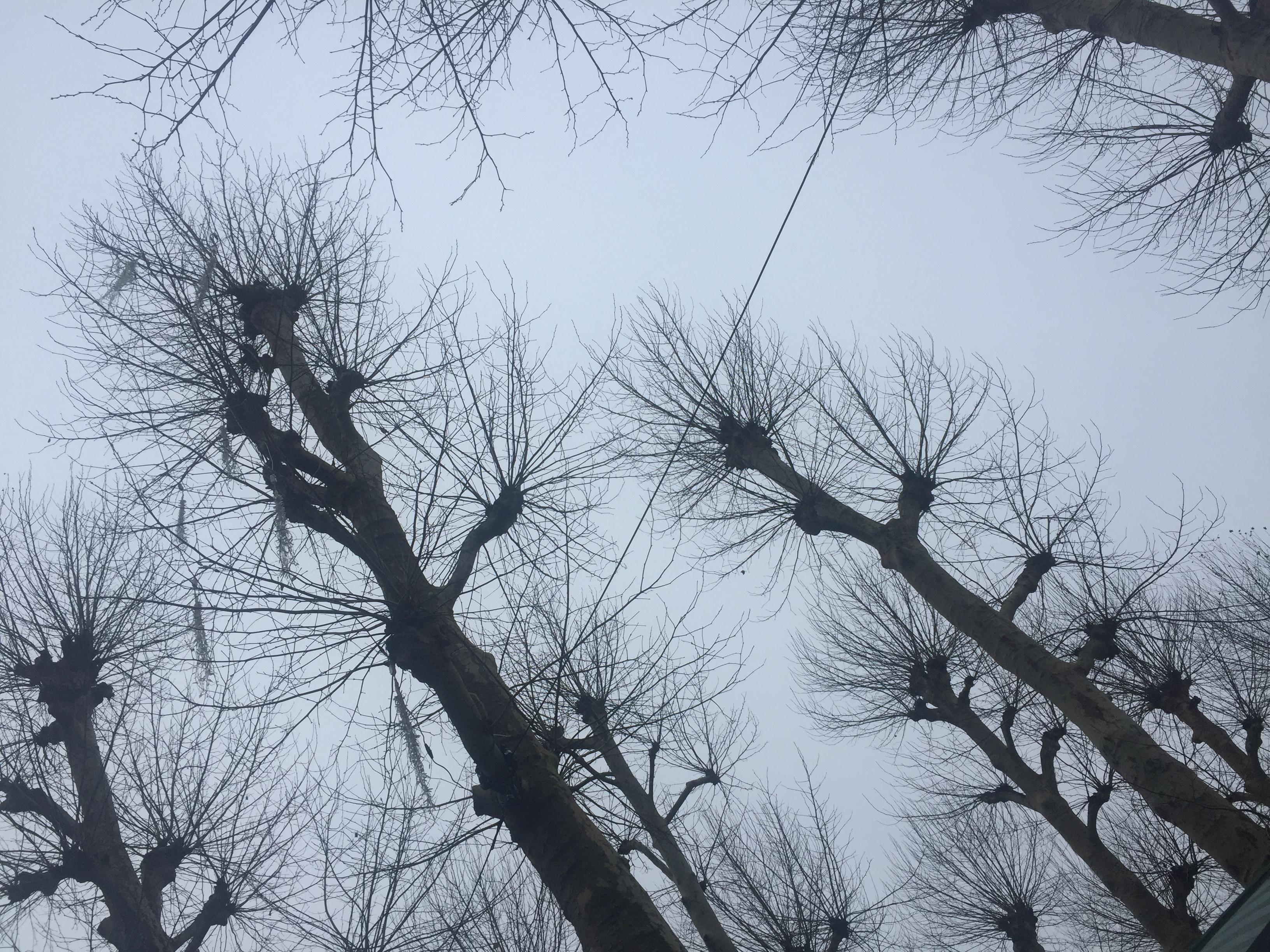Trees look like micro-organism
