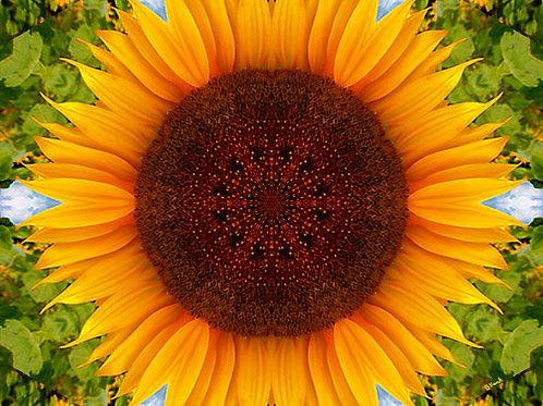 Michael Jackson Tribute Sunflower