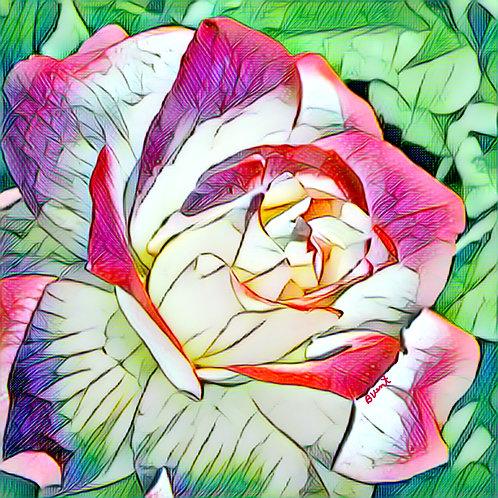 Double Delight Rose Watercolor by Bonnie Vent