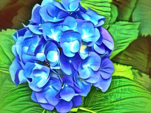 Blue Hydrangea by Bonnie Vent