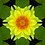 Thumbnail: Yellow Water Lily