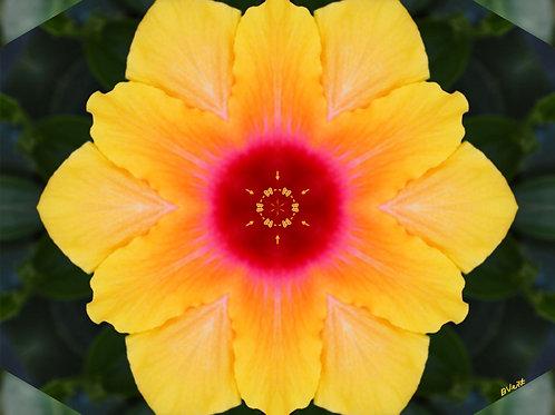 Social Butterfly Hibiscus Spiritual Wall Art