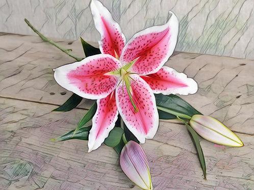 Stargazer Lily by Bonnie Vent