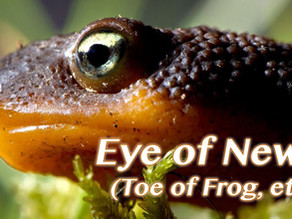 Eye of Newt and Toe of Frog?