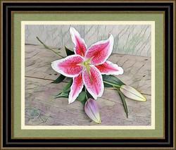 Stargazer Lily by Bonnie Vent - sample frame