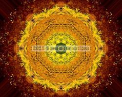 Autumn Sunrise signed by Bonnie Vent