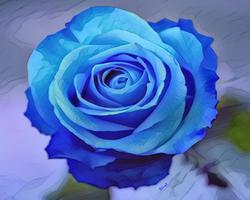 Blue Rose Watercolor 8x10