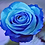 Thumbnail: Blue Rose Watercolor by Bonnie Vent