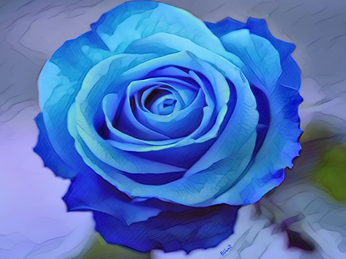 Blue Rose Watercolor by Bonnie Vent
