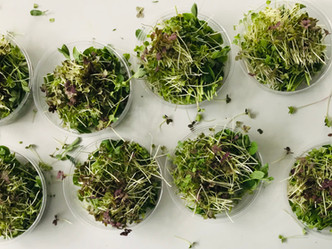 Why we should learn to love microgreens