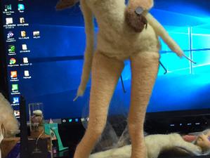 ポージングに苦戦 羊毛フェルト人形