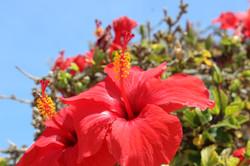 Cypriat Spring
