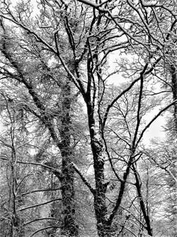 Winter Giants