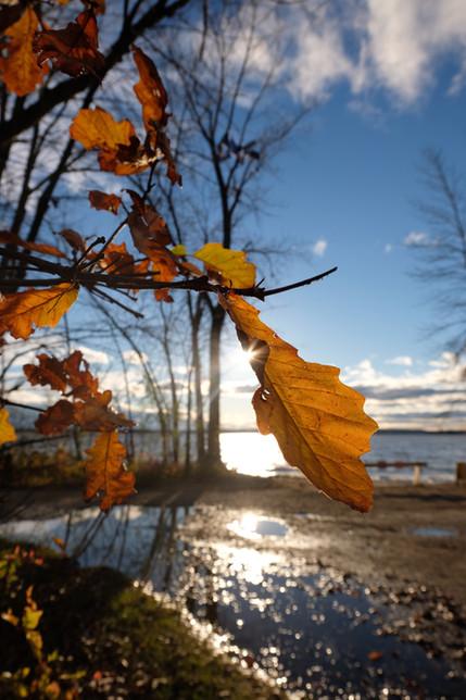 Oka Autumn leaves