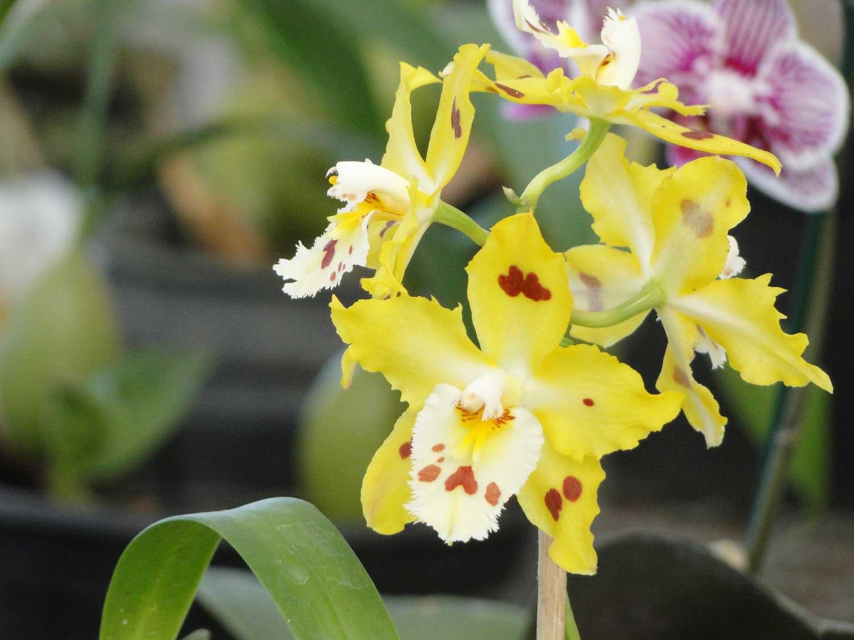 orquidea-07
