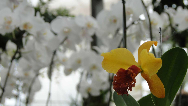 orquidea-02