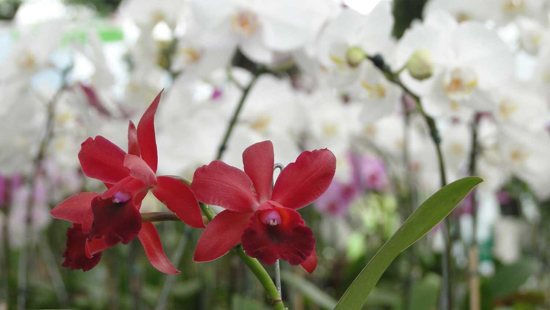orquidea-09