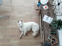 Pension simplicite canine.jpg