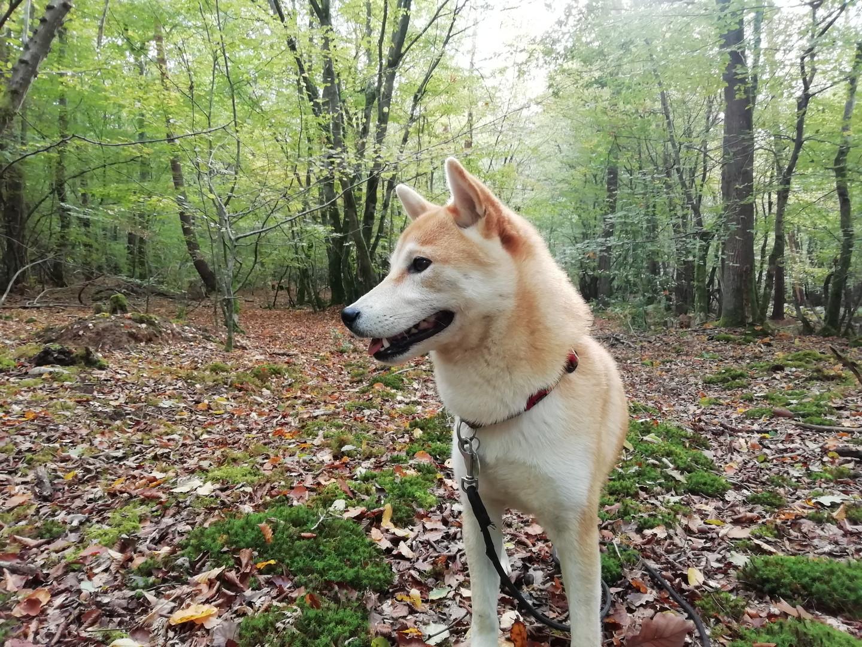 pension_simplicite canine..jpg