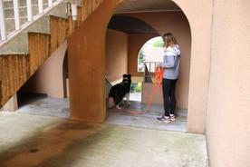 Mantrailing Simplicite canine.JPG