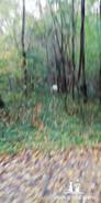 creche_promenade_simplicite canine.mp4