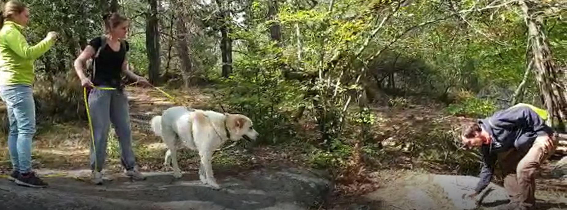Mantrailing_Simplicite Canine.JPG
