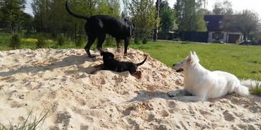 crèche_communication canine.mp4