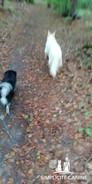creche_balade foret_simplicite canine.mp