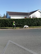 Simplicite canine mantrailing