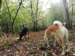 pension_simplicite canine.jpg