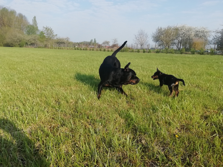 Apprentissage de la communication canine