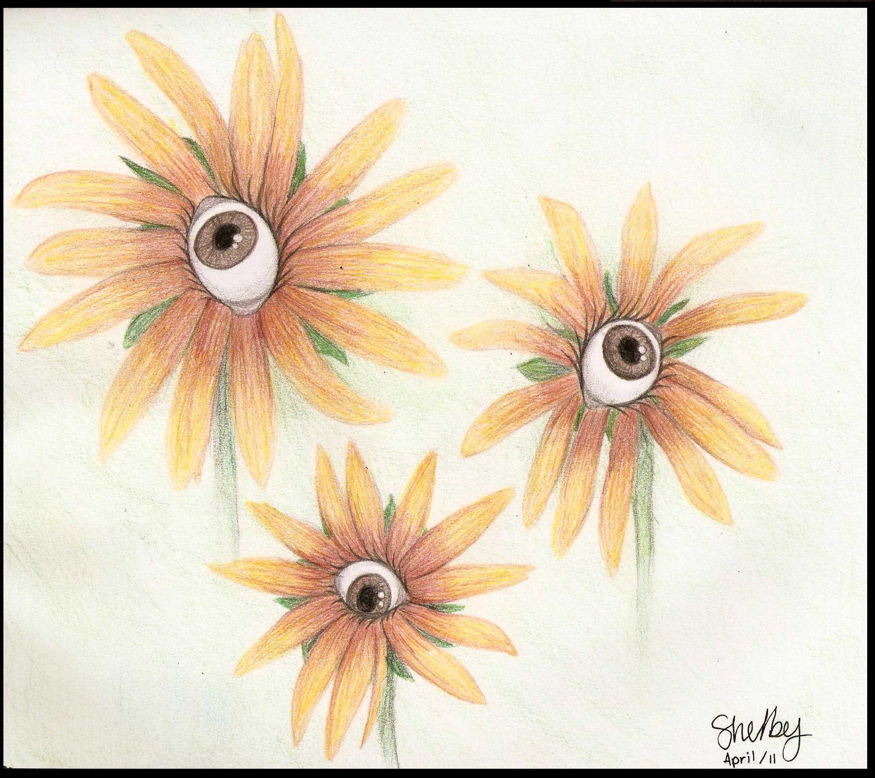 Brown-eyed Susans (2011)