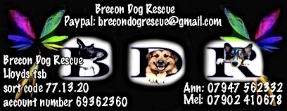 Brecon Dog Rescue