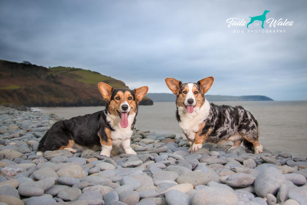 Dog Photography Wales