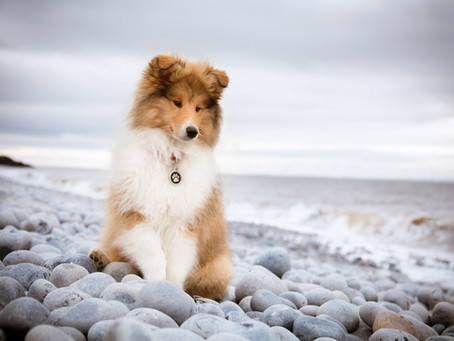 Welcome to Tails of Wales Dog Photography
