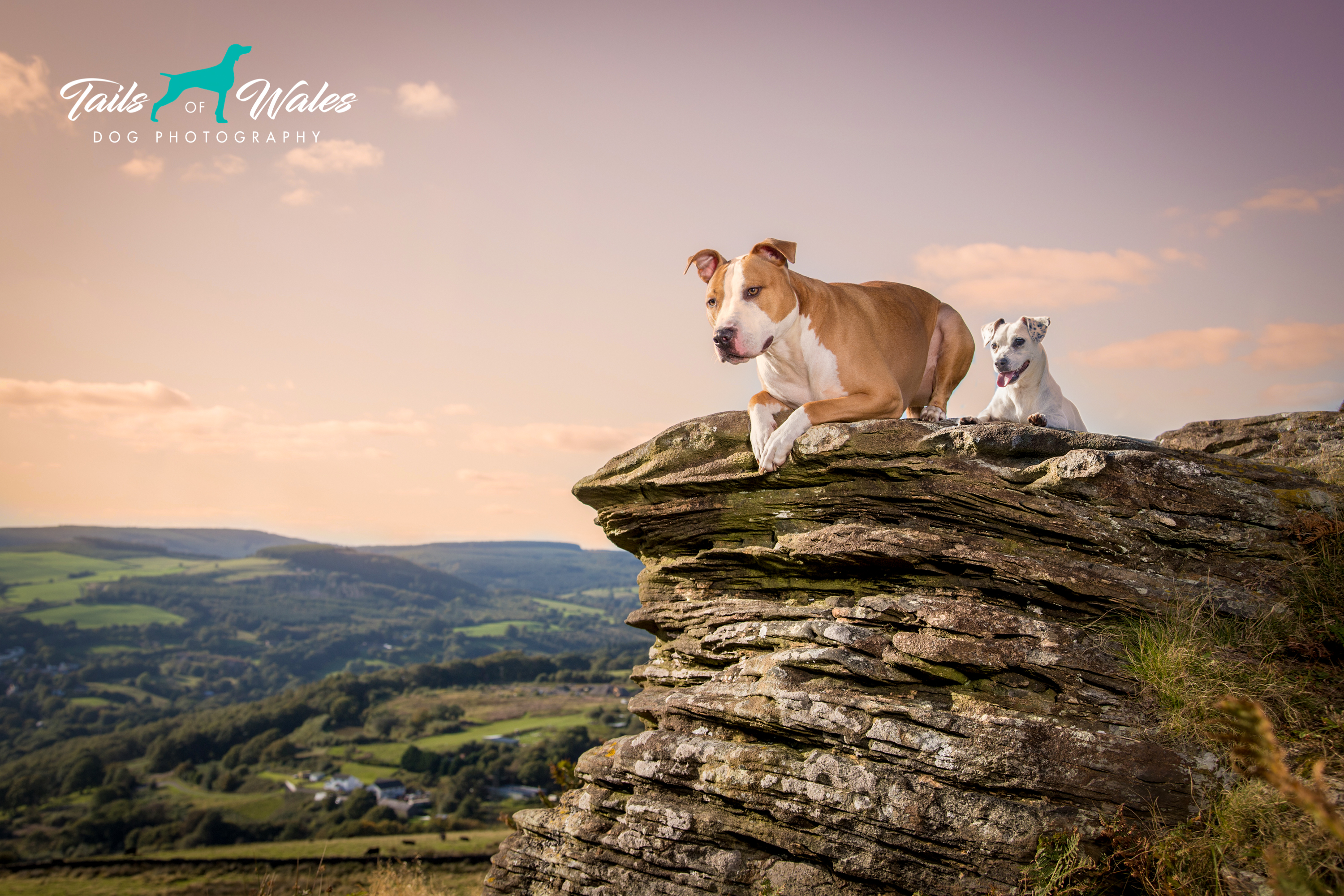 Dog Photography Wales