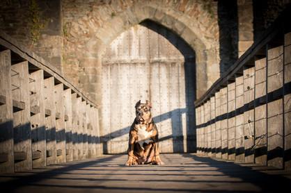 Dog Photography.