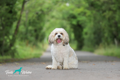 Dog Photography in South Wales.