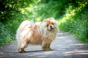 Dog Photograaphy Wales