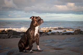Tails of Wales Dog Photography