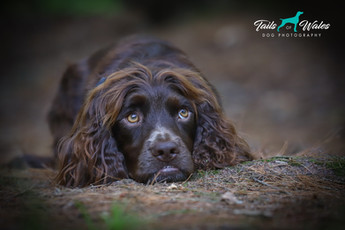 Dog Photographer in Wales.