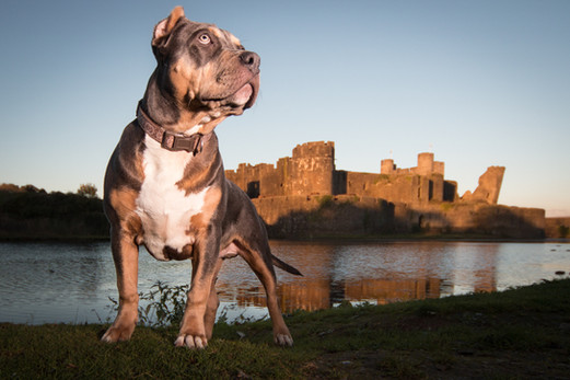 Dog Photography in Wales.