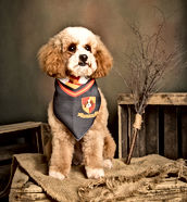 Annie, Animal Assisted Play Therapy® Dog