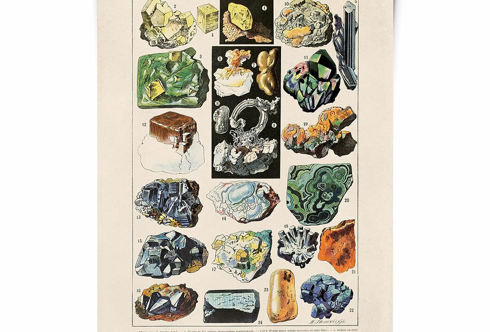 GEMS botanical print/