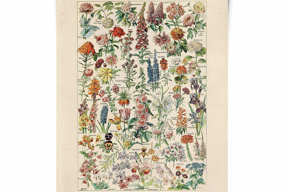 FLORAL botanical print/